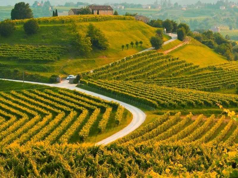 Le colline del Prosecco di Conegliano e Valdobbiadene
